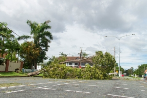a fallen tree and a damaged powerline