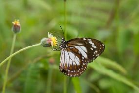 butterfly in Mackay, Australia