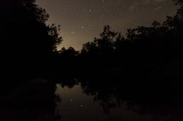 Starry Sky, Alligator Creek