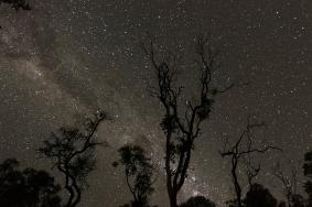 Starry Night, Alligator Creek
