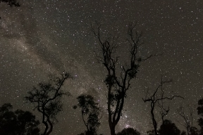 Starry Night, Alligator Creek