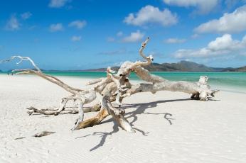 Whitehaven beach white tree