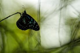 dreamy butterfly