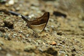 Butterfly, Costa Rica
