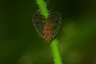 Insect, Honduras