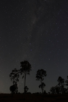 gum tree silhouette
