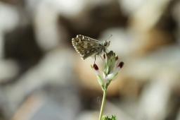 butterfly, Spain