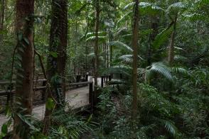 Rainforest on Fraser Island