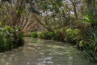 Eli Creek on Fraser