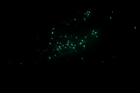 Glowworms at Springbrook National park