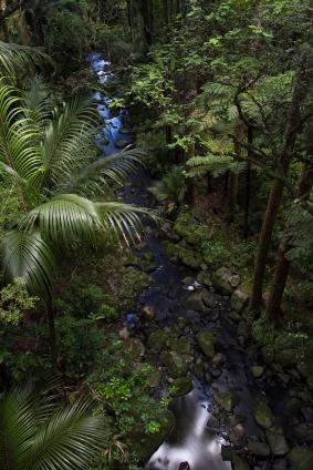 Kauri park at Whangarei