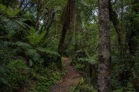 National Park Bushwalk