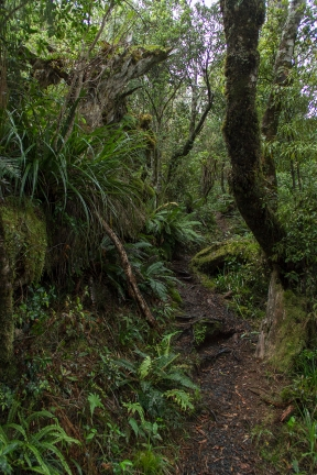 National Park Bushwalk