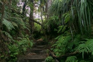 hiking in native bush