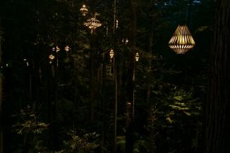 Redwood Tree walk, Rotorua