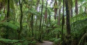 native bush hike New Zealand