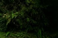 Glowworms New Zealand